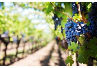Právě skončený veletrh vín ViniSud 2016 obrazem
